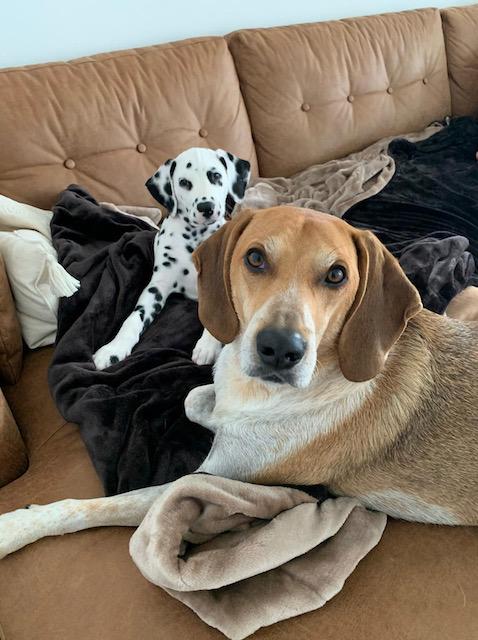 Pablo und sein neuer großer Bruder Vito